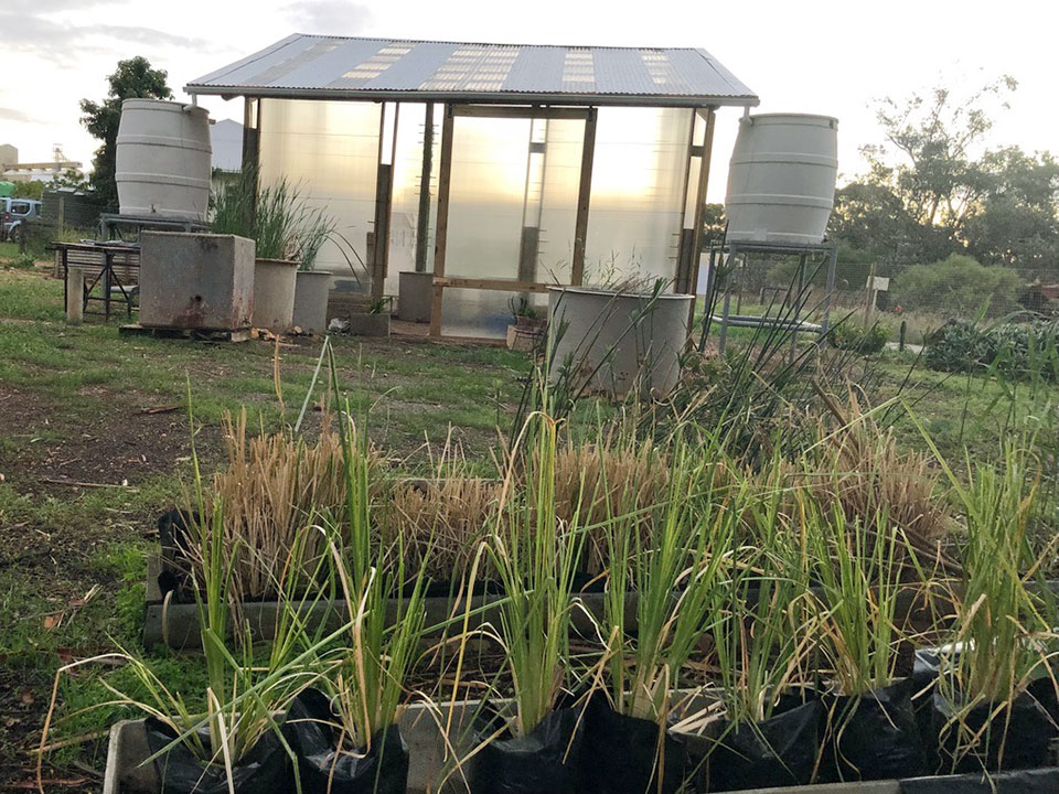 Complete Greenhouse for the Klipdale Groundwater Phytoremediation project
